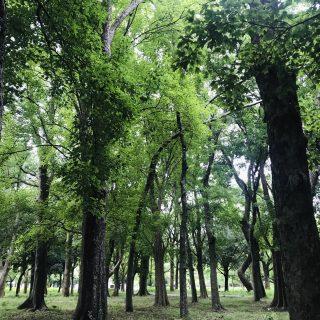 朝ヨガ Zoom オンラインレッスン 〜自然〜