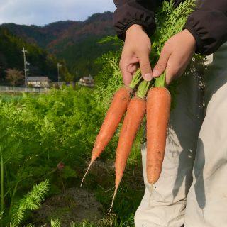朝ヨガ Zoom オンラインレッスン 〜有機農業〜